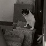 『バカ猫の脱走:傾向と対策』の画像