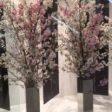 『ひと足お先に Bloom』の画像