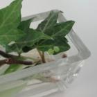 『芽です。』の画像