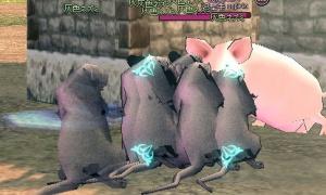 灰色ネズミのこの迫力である