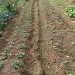 スーの家の自然栽培的オーガニック家庭菜園12ヶ月