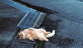 ネコが落ちてたんだけど