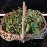 『今年最後の収穫』の画像