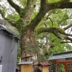 本物の無垢木材 ~茨木市戸田材木店・セルバの木の虫ブログ~
