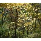 『濃い薮の林床』の画像