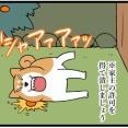 柴犬の不思議な生態は、なんとなく妖怪っぽい