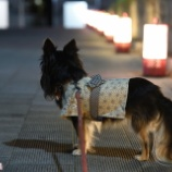 『梅小路公園へ、旧暦七夕まつへ行って来ました☆』の画像
