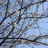 『山桜の家具、納品』の画像