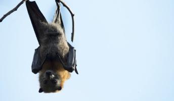 日本にいる筈なのに見た事ない動物「モグラ」「コウモリ」