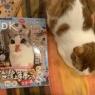 ガチでオススメ雑誌★ネコDK Vol.5