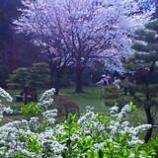 『春のひととき』の画像