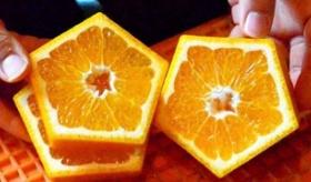 【日本の果物】  スイカにひき続いて・・・・。  日本人が五角形のいよかん、「合格 いいよかん」を作る。   海外の反応