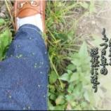 『くっつき草』の画像
