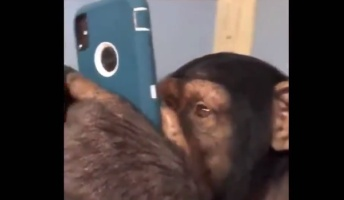 【衝撃】チンパンジーにスマホ与えた結果wwwwwwwwww