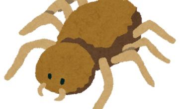 イッヌに蜘蛛のコスプレさせたったwwwwwww