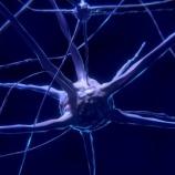『脊髄損傷の治療に新しい光』の画像