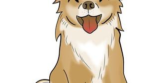 最徐行して車で走ってたら何かが軽くぶつかったかな?という衝撃が。→小型犬を抱いて登場したおばさんがいうには、私がその犬を轢いた?車にぶつけたらしい…