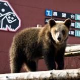 『いつか行きたい日本の名所 のぼりべつクマ牧場』の画像