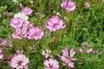 4月です。春の植物たちを、ウォーキング中に、いくつか~身近に出会える春があるのが交野~