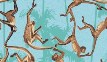 【衝撃】成田空港で密輸の猿を押収した結果とんでもないことが判明wwwwwwwwwwwwwwwwww