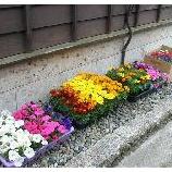 『お庭の手入れ』の画像