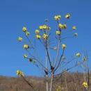 裸の木のてっぺんに黄色い花