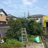 『桑名市|庭の草刈り|木の伐採めちゃ疲れました。』の画像