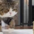 ネコの前方に「小さな箱」があった。どう見ても入れない → 猫は当たり前のようにこうした…