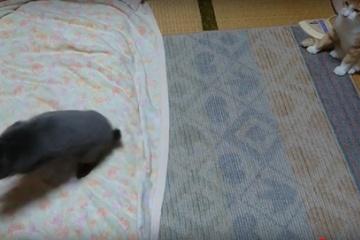 布団ではしゃぐウサギ、その様子をただただ見ている猫