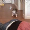 ネコと犬はどうなるの? 飼い主が目の前で倒れた → 2匹はそれぞれこんな感じ…
