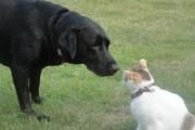 【動物】今年の干支の犬VS猫、どっちが賢い? 脳神経細胞の数を比較 米研究
