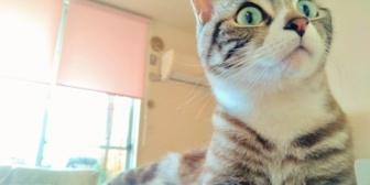 【修羅場】猫にキン◯マ袋を噛まれた。→看護師に血塗れのキン◯マ見られて流水で丁寧に洗われたんだが…