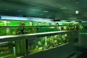【裁判】東京タワー水族館、賃料未払いで閉館の危機