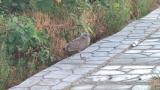 【速報】珍しい鳥見つけた!!!(※画像あり)