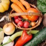 結局、老けに効果がある食べ物や行為(方法)って何が一番良いんだ?
