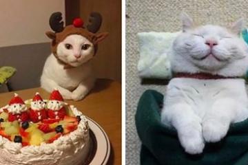 海外「日本の猫はレベルが高い」心をえぐる最高にかわいい猫ちゃんに海外悶絶