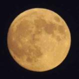 『中秋の名月🌕』の画像