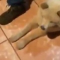 イヌの前で男たちが順番に足を組む。「・・・」 → ちょっと考えて犬はこうした…