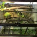 Vino's Reptiles log