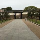 『大阪城の桜』の画像