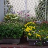 『5月の庭の花Ⅲ;東大和市』の画像