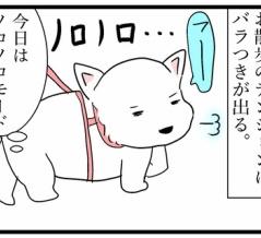 シニア犬とのお散歩事情