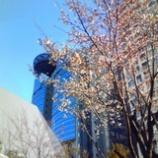 『6分咲き』の画像