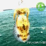 『2020秋イカ・オープン!浜田市でエギング#027』の画像