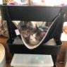 IKEAのあるものが猫にちょうどよかった!