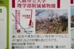 「京阪沿線 梅の名所」情報に、私市植物園が紹介されてる!~園内には「さんご」、「源平」という珍しい品種もあるそうな!~