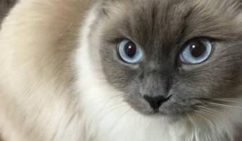 ネコ画像を見て月曜からまた頑張りたいので貼ってください