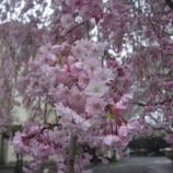 『3月の東大和⑥』の画像