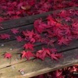 『やっと秋終わります。Finally it will be over in autumn.』の画像