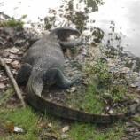 『オオトカゲを探しに~ルンピニ公園散策~』の画像
